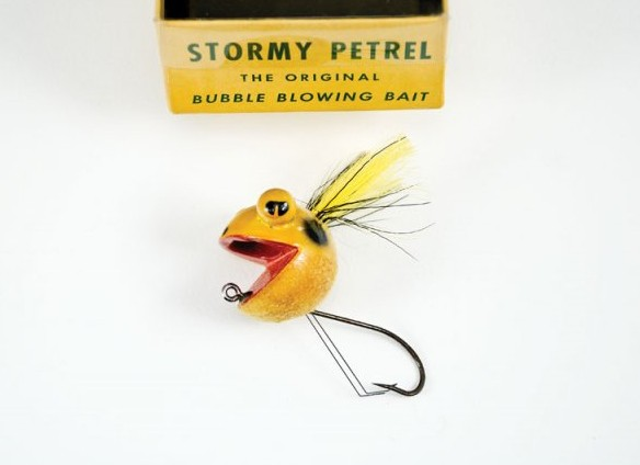Stormypetrel